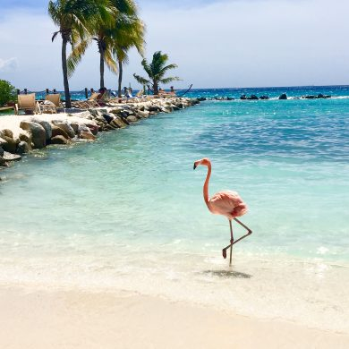beach in Aruba with pink flamingo standing on one leg near the water