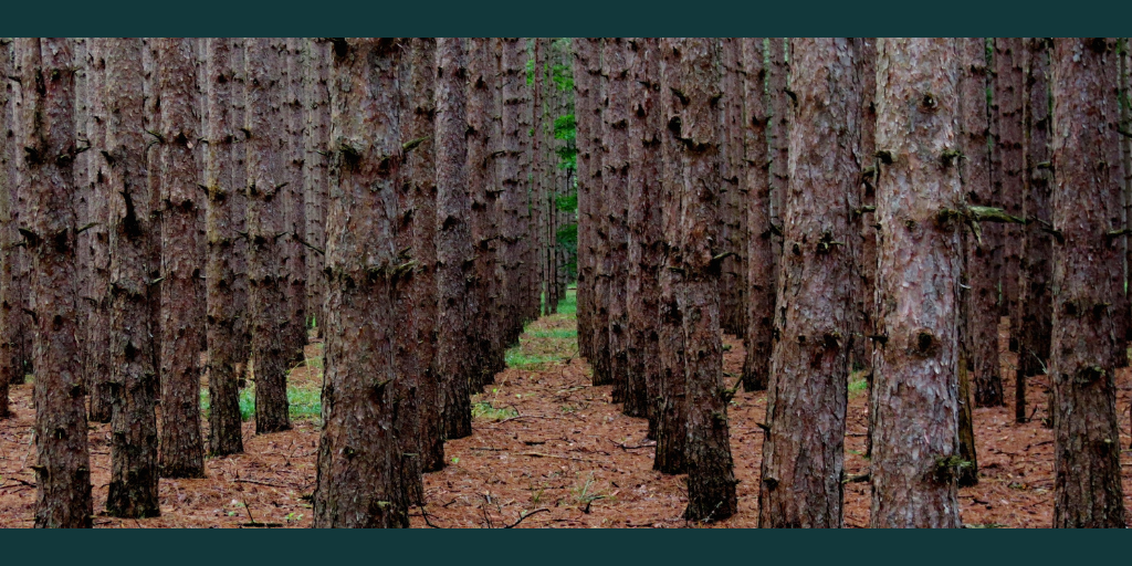 Rows of consistent trees